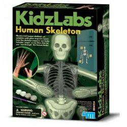 Ljudski kostur